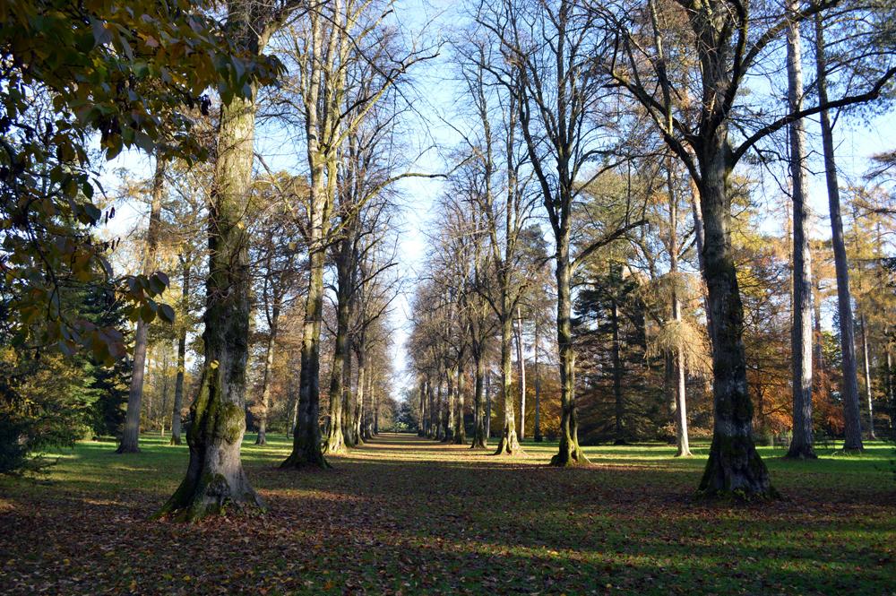 Westonbirt-Arboretum-Tetbury3